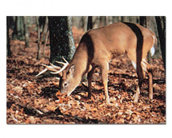 Deer Type A - img018-Tru-Life-Archery-Animal-Targets-LARGE